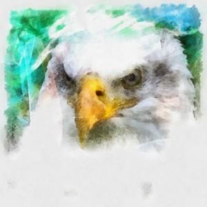 bald-eagle-digital-painting