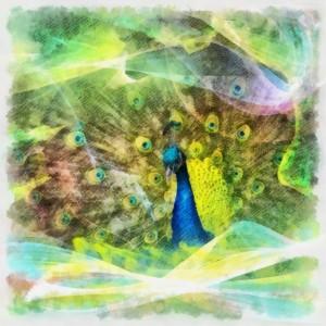 The power animal spirit guide Peacock