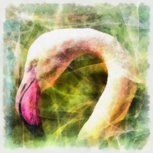 The Power Totem Spirit Guide Pink Flamingo