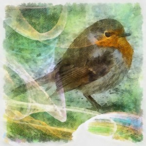 Power totem spirit guide animal the Robin