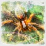 spider-digital-painting