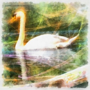 Swan power totem animal
