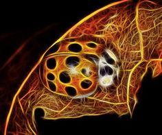 Ladybug animal totem