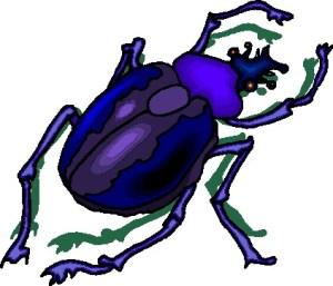 Power Totem Spirit Animal Beetle – Ambers Tarot Online and