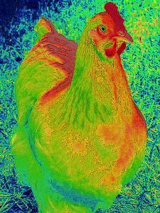neon-chicken